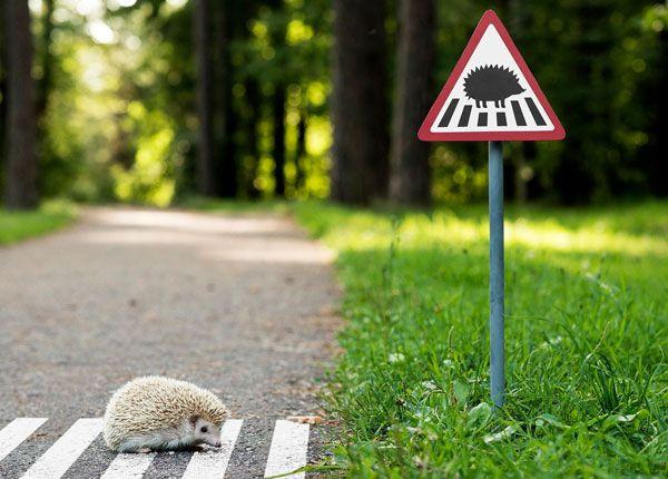 Reglas de Seguridad para Manejar con Animales en la Carretera